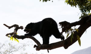The Chaparrí Reserve is a wildlife hotspot, particularly known for its population of the rare spectacled bear.