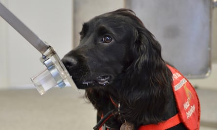 Dog from Medical Detection Dogs