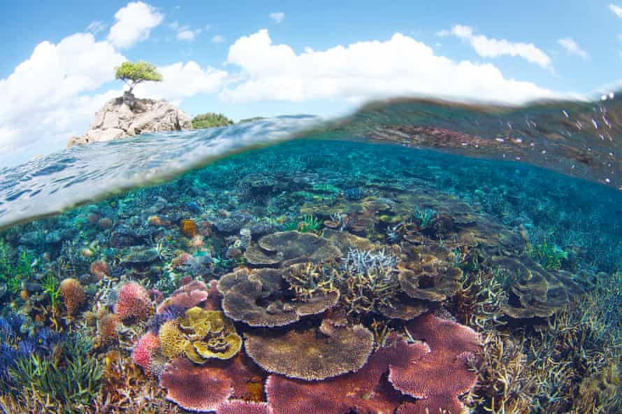Tun Mustapha Marine Park  is home to more than 250 species of hard coral.