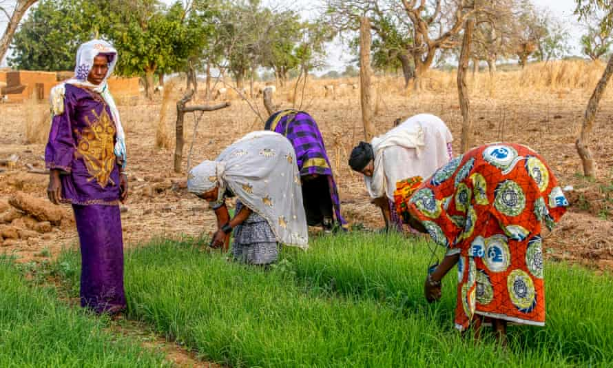 Members of a cooperative at work in a vegetable garden, Ouahigouya, Burkina Faso, West Africa.