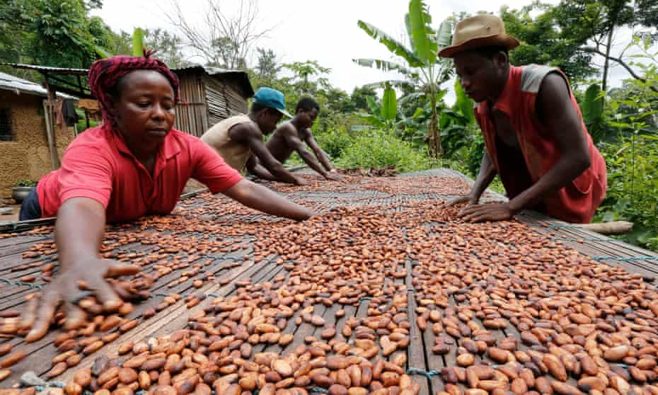 People work with cocoa beans in Enchi, Aowin district, Ghana.