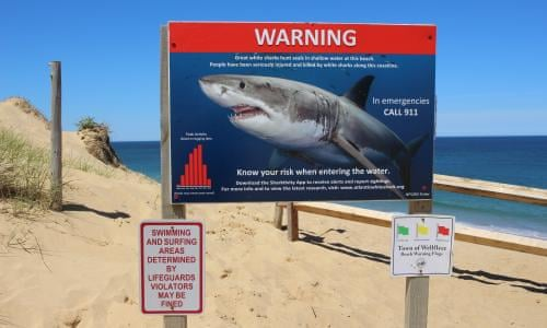 Echoes of Jaws as Cape Cod learns to live with rise of the