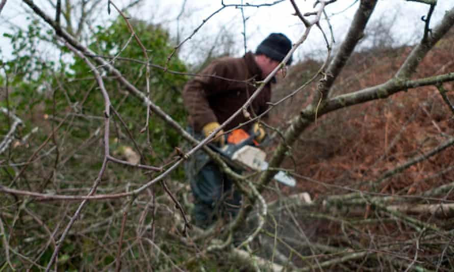 Tree need regular thinning to produce high quality timber.