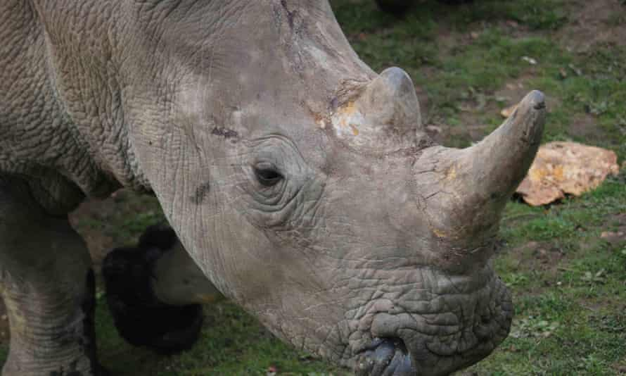 Vince was found dead by staff at Thoiry zoo in France on Tuesday morning.