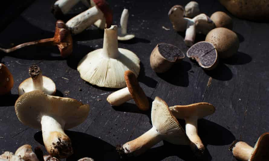 Collection of mushrooms gathered from the South Mountain Reservation.