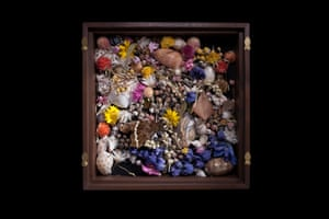 Mimosa 1 2016 Wooden case, mixed flowers, beetles, silver pins