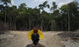 The scientists report that 17% of the Amazon rainforest has been lost since 1970.