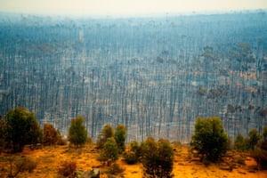 Bushfire devastation, Australia