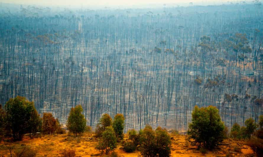 Bush fire devastation in Australia
