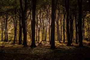 A forest in Fordingbridge, Hampshire, near Cosmo Sheldrake's studio.