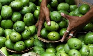 A vendor arranges green mangoes in Manila