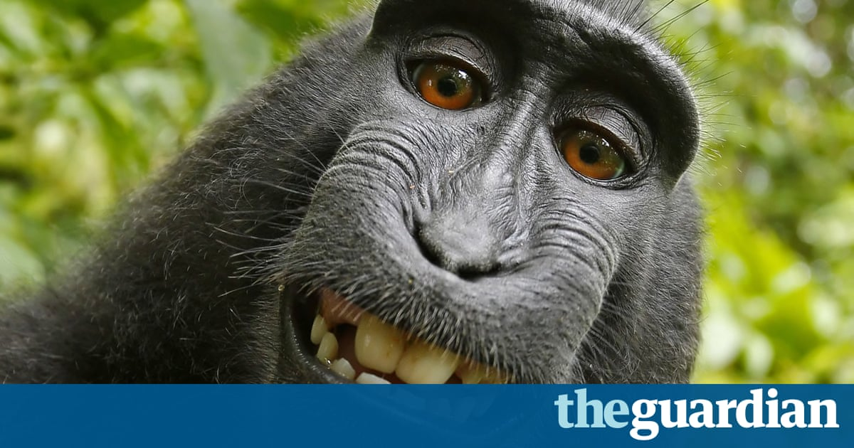 Monkey selfie photographer says he's broke: 'I'm thinking of dog walking'