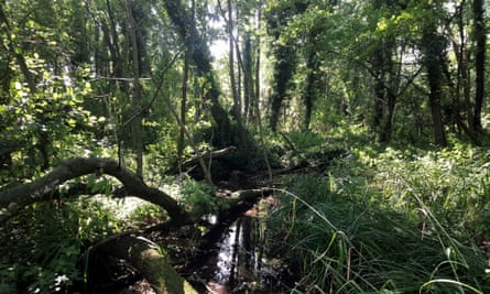 Alder Carr, near the source of the River Purwell.