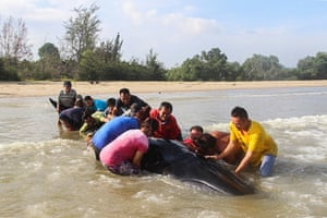 Malaysian villagers and fire fighters help to push a nine metre-long whale back in the sea after it was found stranded on a beach in Miri, Sarawak