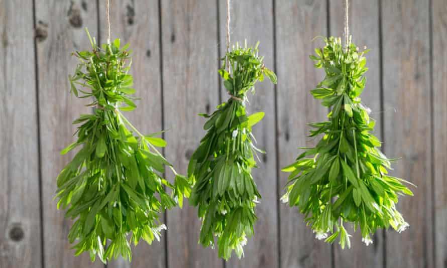 Sweet woodruff (Galium odoratum), widely used in homeopathic remedies.