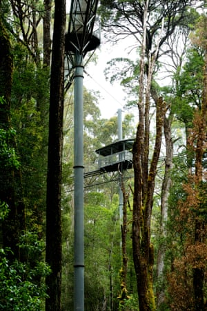 The walkway at Otway Fly Treetop Adventures