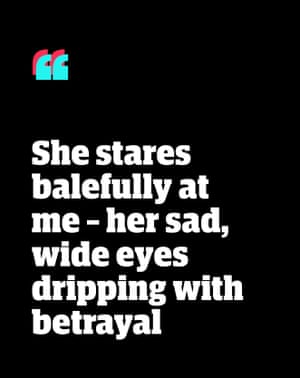 Quote: 'She stares balefully at me - her sad, wide eyes dripping with betrayal'
