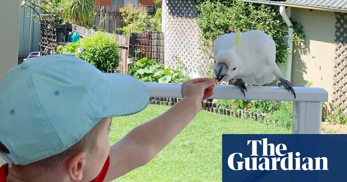 'Rainbow magpie': children give their pick for Australian bird of the year