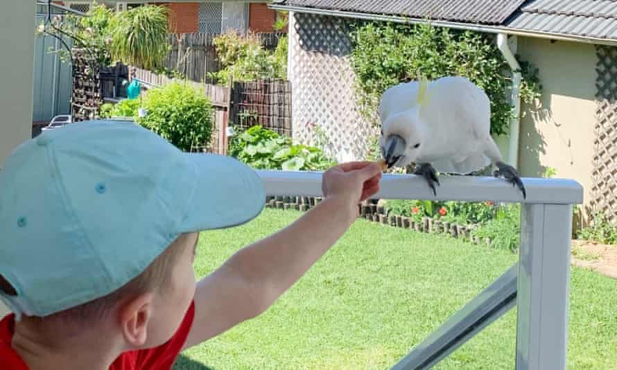 Seven-year-old Louis is attracted to the cockatoo's 'sharp beak and long talons'.