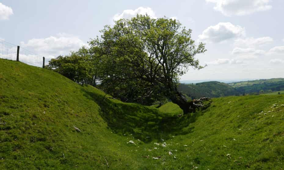 A tree clinging to Offa's Dyke near Oswestry, Shropshire