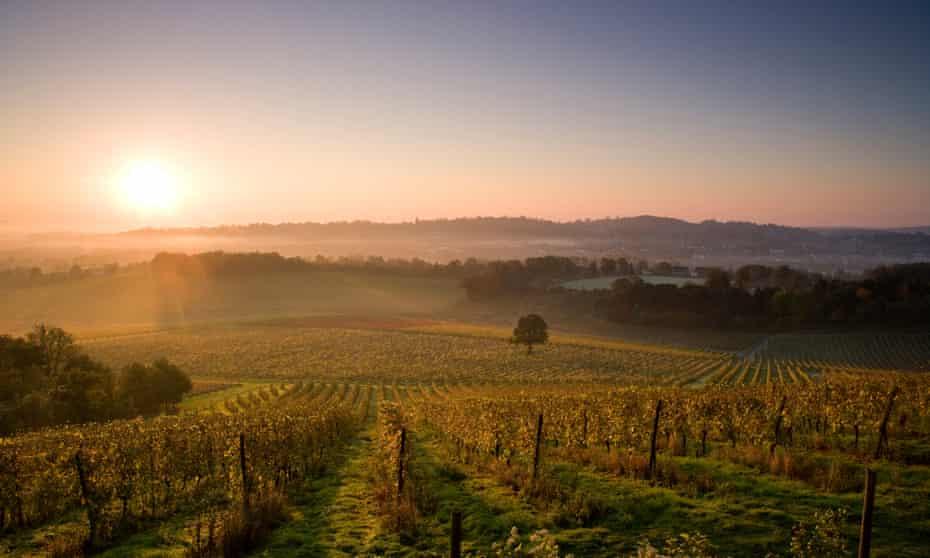 Sunrise over Denbies Wine Estate, Surrey.