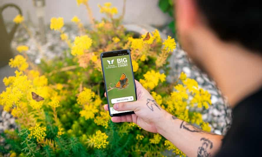 The Big Butterfly Count app being used to record species.