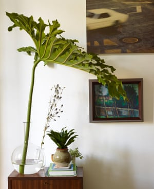 Tree philodendron in a vintage chemistry flask in the dining room.