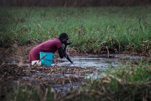 A woman drinks water with her hands from the swamp