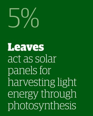 5% - leaves act as solar panels for harvesting light energy through photosynthesis