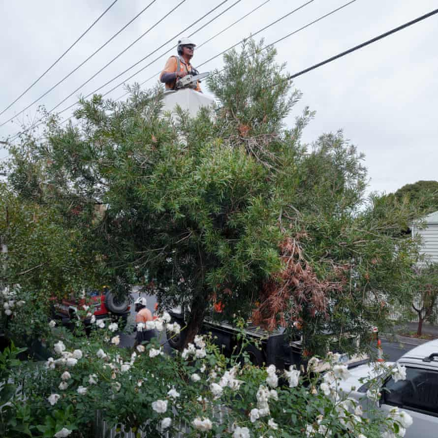 Council workers keep trees from the wires.