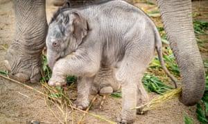 """Calf elephant"""