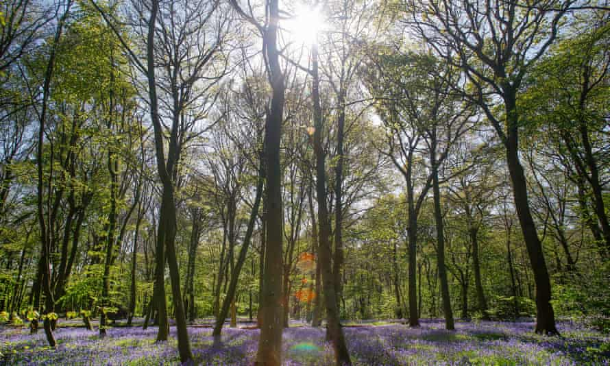 A beautiful scene in Epping Forest
