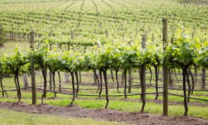 'The Hunter Valley was one of Australia's most celebrated win regions in the 1990s.'