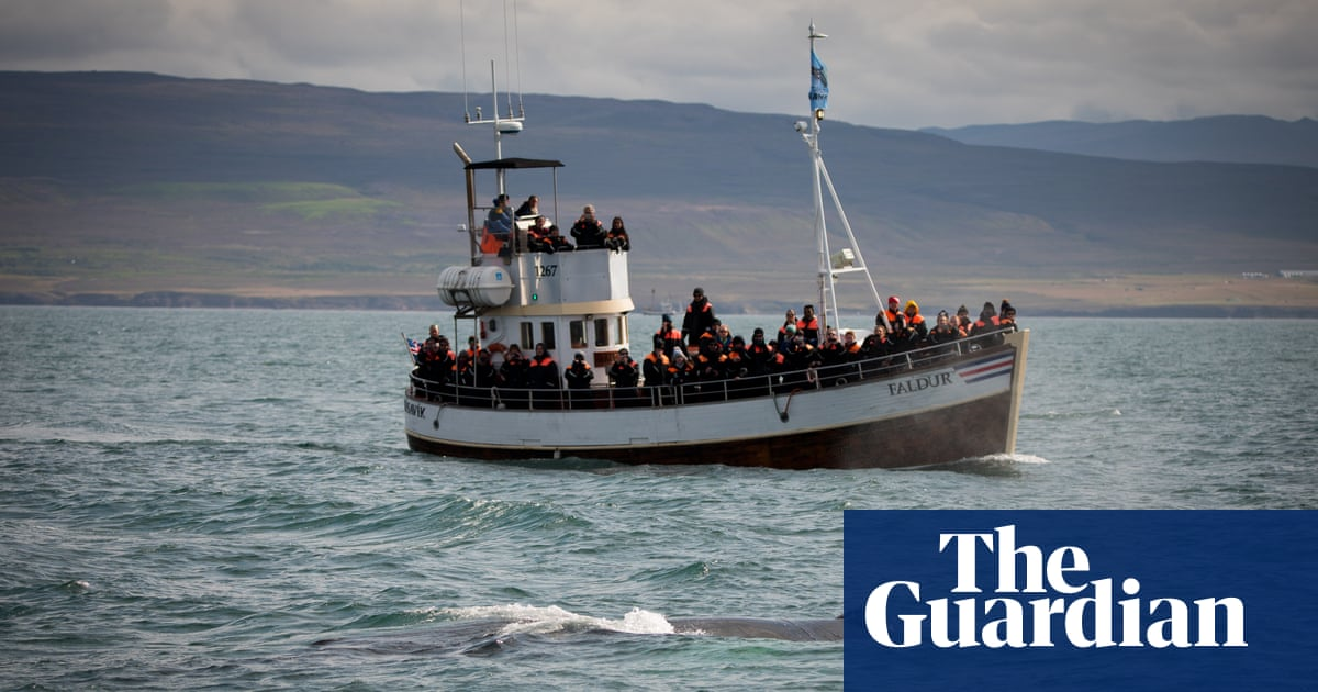 It's oh so quiet: silent whale watching on Iceland's first electric boat tour