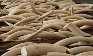 Ivory tusks stored in boxes at Hong Kong Customs after they were seized from a container from Nigeria.
