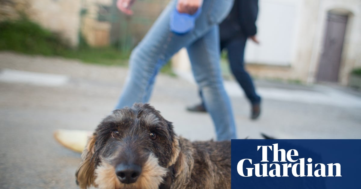 How to Love Animals by Henry Mance review – the case against modern farming