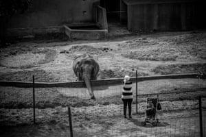 Elephant, France 2016
