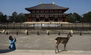 One of Nara's estimated 1,300 free-roaming deer.