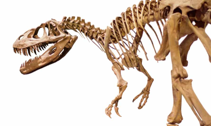 The skeleton of a dinosaur – the new must-have for investors?