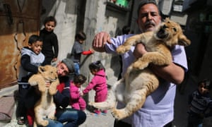 <strong>Gaza City, Gaza</strong><br>Saad al-Jamal holds a lion cub outside his family house in the Rafah refugee camp. Al-Jamal said he bought the two-month-old cubs from the Rafah Zoo. He lives with the animal inside this family home. We hope he knows how big they will get!
