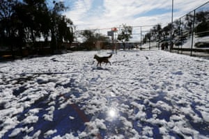 Santiago, Chile A dog plays after unusual snowfall