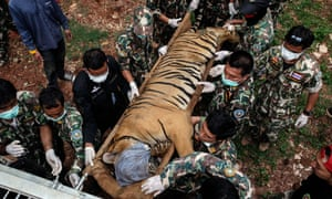 Thai wildlife officers load a tiger on to a truck outside the temple in Kanchanaburi province.