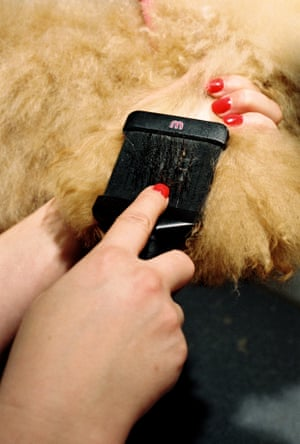 A dog being grooming in the Love My Human grooming rooms