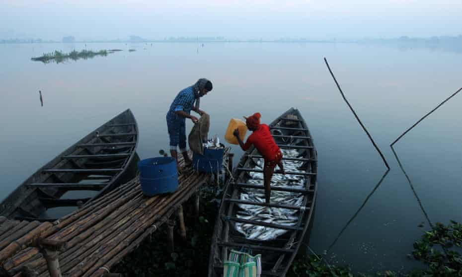 Fishermen collect fish