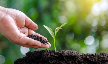 tree sapling hand planting sprout in soil with sunset close up male hand planting young tree over green backgroundPK9X6A tree sapling hand planting sprout in soil with sunset close up male hand planting young tree over green background