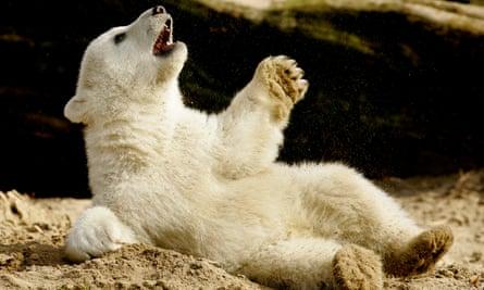 Knut, the polar bear cub in 2007.