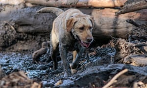 A search and rescue dog is guided through the mud in Montecito.
