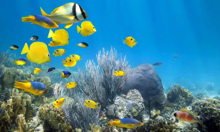 According to Key West's mayor, Teri Johnston: 'The reef is the centre of our economy and tourist trade and a source of enjoyment for all of Florida and the world.'