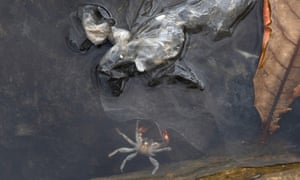 A dead crab floats alongside dumped plastic in the Philippines.