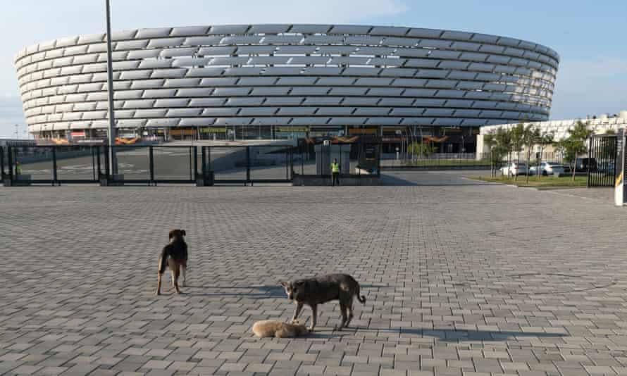 Dogs outside the Baku Olympic Stadium.